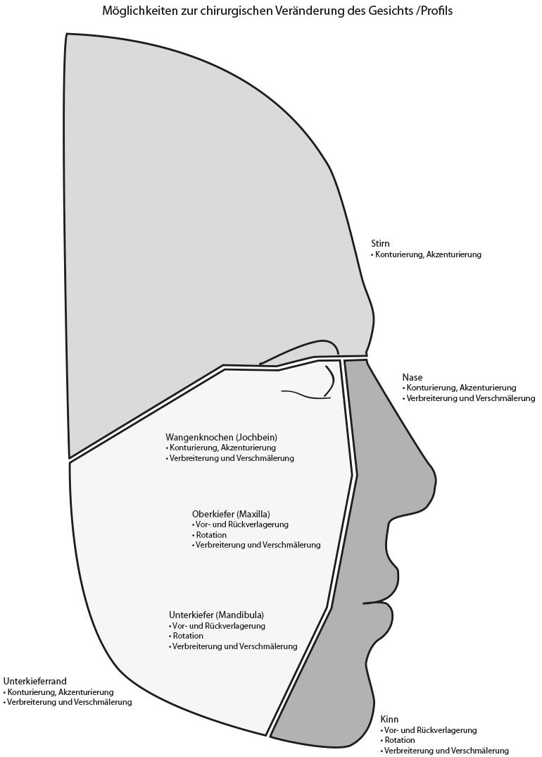 Nett Stirn Knochen Bilder - Menschliche Anatomie Bilder ...